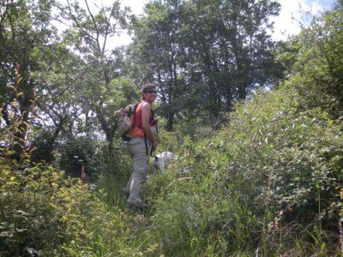 Foto 2 - A la búsqueda de la senda entre la maleza