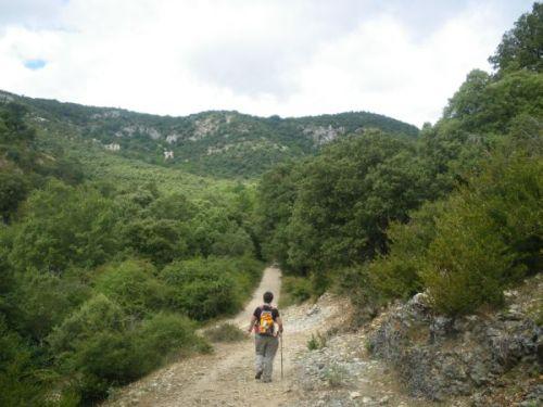 Foto 3 - Llegando al camino de Abárzuza